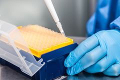 Attaching a disposable tip to a micropipette. Scientist attaching a disposable tip to a micropipette Royalty Free Stock Photos