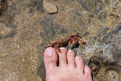 Attack of a crab on the person Stock Image