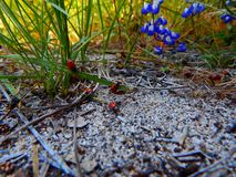 Free Attack Of The Lady Bugs Royalty Free Stock Photos - 128848068