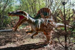 Attack of the prehistoric dinosaur Spinosaurus. In the autumn forest stock photography