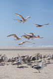 Attack seagulls stock image