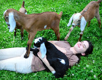 Attacked by baby goats Royalty Free Stock Image