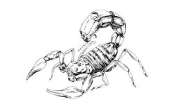 Attacker Scorpio drawn in ink by hand Stock Photography