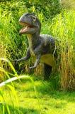 Attacking Allosaurus Stock Photos
