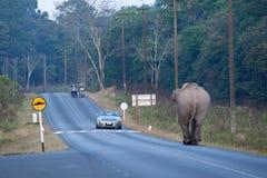 Attacksupercar för asiatisk elefant på asfaltvägen i den Khao Yai nationalparkvärldsarvet, man två på att ta för mopeder arkivbild