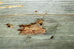 Attaque d'insecte sur le vieux bois de construction images libres de droits