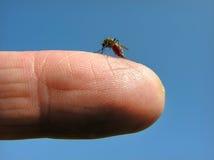 Attaque de moustique image libre de droits