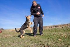 Attaques de chien sur des humains photos stock