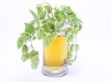 Attaquez la bière fraîche avec le capuchon de la mousse avec le brin des houblon Photo stock