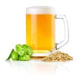 Attaquez la bière fraîche avec les houblon verts et le blé d'isolement sur le fond blanc Photographie stock libre de droits