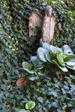 atteggiamenti Fotografie Stock