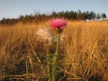 Atteggiamenti di autunno Fotografia Stock Libera da Diritti