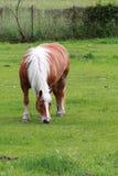 Atteggiamento del cavallo Immagine Stock