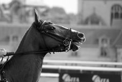 Atteggiamento del cavallo Fotografie Stock