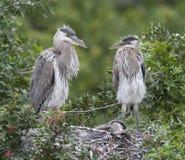 Atteggiamento dell'uccello Fotografie Stock Libere da Diritti