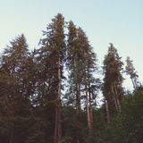 Atteinte d'arbres Photographie stock