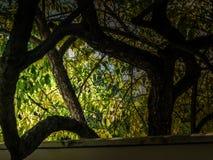 Atteinte de l'arbre Photographie stock