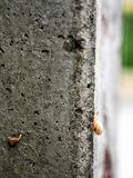 Attempt. Young snail attempts to climb up electric pole Royalty Free Stock Image
