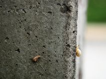 Attempt. Young snail attempts to climb up electric pole Stock Photography