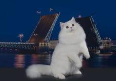 Attendez le chat sur le fond d'une ville de nuit Photographie stock