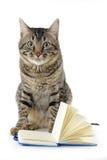Attent katt med en öppen anteckningsbok Arkivfoton