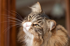 Attent Kitty Stock Images