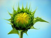 Attente à la fleur Photo libre de droits