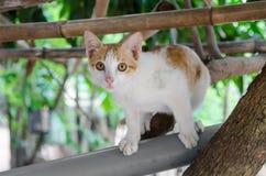 Attente d'attente de chats Images libres de droits