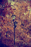 Attente d'automne Photo stock