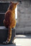 Attente de chat Photographie stock libre de droits