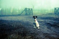 Attente de chien Photographie stock libre de droits
