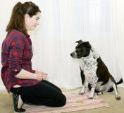 Attente de formation de chien le festin Image libre de droits