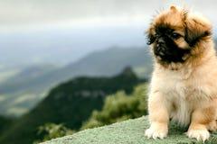 Attente de petit chien Image stock
