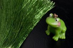 Attente du roi de grenouille Photo stock