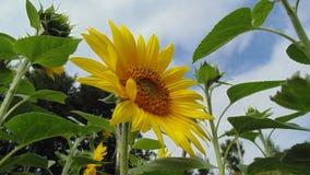 Attente du soleil Photos libres de droits