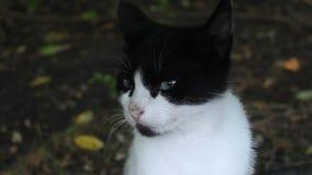 Attente et odeur de chats banque de vidéos