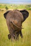 Attente Relaxed d'éléphant amis, masais Mara Photo libre de droits