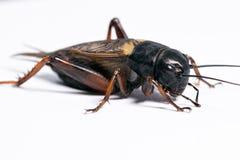 Attente vivante d'insecte photos libres de droits
