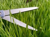 Attention au groupe - herbe de découpage Photographie stock