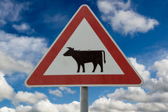 Attention Cow crossing road sign. Against sky royalty free stock images