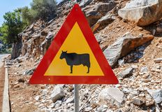 Attention crossing cows red and yellow road sign. Close Stock Image