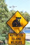 Attention Koalas Royalty Free Stock Image