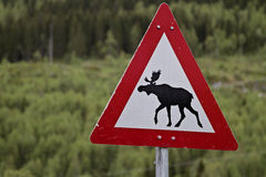 Attention moose Stock Photography
