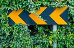 Attention road sign. Yellow attention road sign warning drivers for dangerous curve ahead (over green leaves royalty free stock images