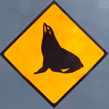 Attention Seals or Sealions on Road Sign. New Zealand Road Sign, Attention resting seals or sea lions on road isolated on dark grey background stock photography