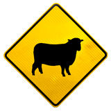 Attention Sheep Crossing Road Sign. New Zealand Road Sign, Attention Sheep Crossing Road isolated on white background stock images