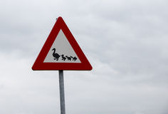 Attention sign crossing ducks Stock Photography