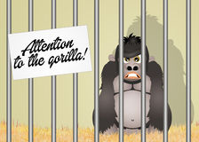 Attention to the gorilla Royalty Free Stock Photos