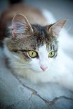 Attentive cat. Attentive young cat looking around Stock Photo