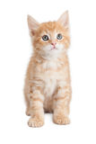 Attentive cute orange tabby kitty. Cute little orange color young tabby kitten sitting on white with attentive expression Stock Photo